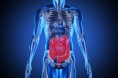 Scientists Discover a New Organ in the Human Body